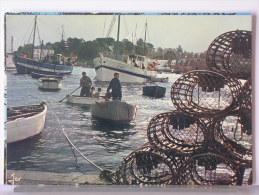 RETOUR DE PECHE EN BRETAGNE - Pêche