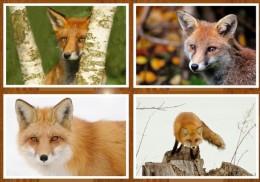FOX C-a-r-d-s X50 - Animaux & Faune