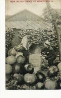 Moncton Surrealisme Montage Photo Gros Fruits Pommes Apples Pressoir - Other