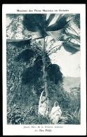 FIDJI DIVERS / Jeunes Filles De La Colonie Indienne / - Fidji