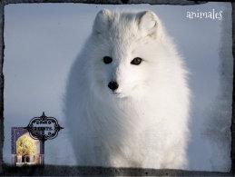 POSTAL ANIMALES 1 - Animaux & Faune