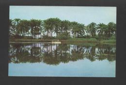 POSTCARD 1960years AFRICA ANGOLA RIVER CUANZA AFRIKA AFRIQUE Xx - Angola