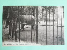 """LYON - Parc De La Tete D'OR , L'Eléphant """" LOULOU"""". - Andere"""