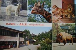 Zoo Basel Bale Garten - Animaux & Faune