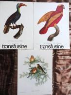 Oiseaux   - Publicité Des Laboratoires Roland - Marie - Réservé Au Corps Médical - Animals