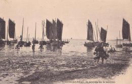 CONCARNEAU  Arrivée De La Sardine - Concarneau