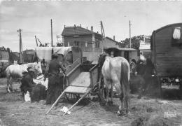 13 - Campement De Bohémiens - Saintes-Maries-de-la-Mer -Fêtes Du 24 & 25 Mai- édit; Mireille -Très Bel Etat (2 Scans). - Saintes Maries De La Mer