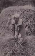 ¤¤  -  SRI LANKA  -  CEYLON   -  Singhalese Girl Gleaning   -  Agriculture   -  ¤¤ - Sri Lanka (Ceylon)