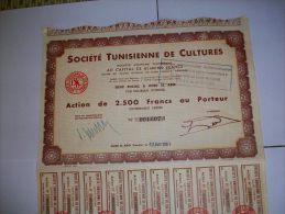 2203  TUNISIE  Sté Tunisienne De Cultures Siège à OUED EL ABID Par SOLIMAN - Shareholdings