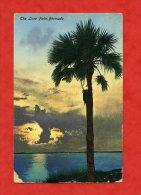 * ETATS UNIS-The Lone Palm,BERMUDA (BERMUDES)-1928 - Bermudes