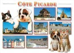 CPSM Côte Picarde     L1317 - Francia