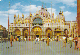 Italy Venezia Colombi in Piazza San Marco