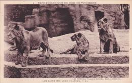 CPA ZOO De Vincennes @ 3 LIONS - Lions