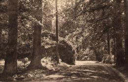 BELGIQUE - FLANDRE ORIENTALE - KLUISBERGEN - KWAREMONT - QUAREMONT - Château De Calmont - Une Allée Dans Le Parc. - Kluisbergen