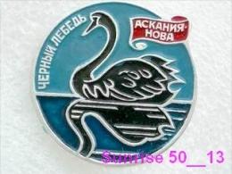 Animals: Bird Black Swan - Cygnus Atratus - Ascanius Nova / Old Soviet Badge_035_an2201 - Animals