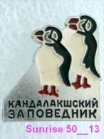 Animals: Bird Penguin - Sphenisciformes - Chick / Soviet Badge _35_an2219 - Animals