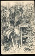 VANUATU DIVERS / Intérieur De La Brousse / - Vanuatu