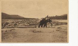 Laos   Elephant Tirant Une Bille De Teck  Edit Cie Coloniale Du Laos  Vientiane - Laos