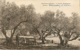 Le Thor (84) Cueillette Des Olives  , Maison Chavillon - Other Municipalities
