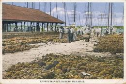 Bahamas Nassau Sponge Market Marché Aux Eponges Timbrée Nassau 1935 Edit Sand's Studio - Bahamas