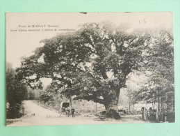 Foret De WAILLY - Gros Chene Mesurant 7 Mètres De Circonférence - Other Municipalities