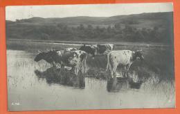 B1009, Vaches Dans Les Marais, A. 718, Circulée 1914 Depuis Sion Suisse - Koeien