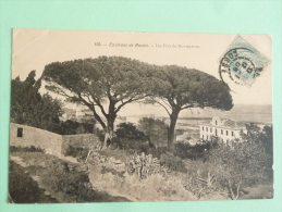 Environs De BASTIA, Les Pins De MONTEPIANO - Bastia