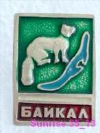 Animals: Sable - Zibeline - Sobol National Park Baikal / Old Soviet Badge_035_an2206 - Animals