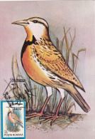 OISEAUX,BIRDS, STURNELLA NEGLECTA, CM,CARTES MAXIMUM, MAXI CARD,1992,ROMANIA - Oiseaux
