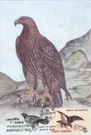 OISEAUX, MOUNTAINES BIRDS, AQUILA CHRYSAETOS, , CM,CARTES MAXIMUM, MAXI CARD,1993,ROMANIA - Aigles & Rapaces Diurnes