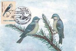 OISEAUX, GOLD BIRDS, PARUS CYANUS, CM,CARTES MAXIMUM, MAXI CARD,1993,ROMANIA - Oiseaux