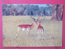Kenya - Gazelles De Grant - Scan Recto-verso - Kenya