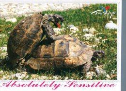 (915) Tortoise - Turtle  - Tortue - Tartarughe