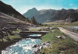 BACELONNETTE  -  Les Alpes Paturage Troupeau De Moutons Sur Les Bords De La Rivière  L'Ubaye - Barcelonnette