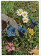 FLOWER / TREE - AK 158513 Stengelloser Enzian Und Andere Alpenblumen - Flores, Plantas & Arboles