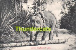 CPA SRI LANKA CEYLON ELEPHANT AT WORK - Sri Lanka (Ceylon)