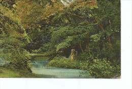 PAISAJE DE UN BOSQUE SURCADO POR UN RIO   OHL - Postkaarten