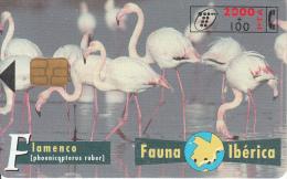 SPAIN - Flamingoes, 04/97, Used - Spain
