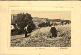 Agriculture - Moisson - Le Moissonneur - 47170 - Cultures