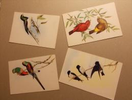 Lot De 4 Cartes Postales OISEAUX Animaux (2) - Pájaros