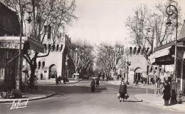 AVIGNON               AVENUE JEAN JAURES   ANNEE 1952 - Avignon