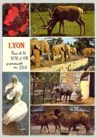 Lyon (69) - Parc De La Tête D´Or - Jardin Zoologique - Quelques Vues (1) - Lyon