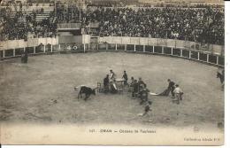 ALGERIE ORAN  COURSES DE TAUREAUX - Oran