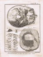 """Gravures Anciennes""""anatomie"""" Benar Dirix - Technical Plans"""