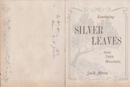 Afrique Du Sud - Capetown - Opera Tivoli Theatre - Silver Leaves Table Mountain - Feuilles Peintes - Bouclier Guerrier - Afrique Du Sud