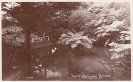 RPPC WELLINGTON - Botanical Gardens Used Stamp - New Zealand  ( 2 Scans ) - Nuova Zelanda