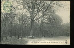 Paris Bois De Vincennes 16 Le Gros Arbre CLC 1906 - District 12