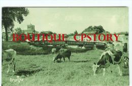 VACHE - Troupeau De Vaches Au Paturage à St Savinien - Pont Bridge Brucke - Dos Scanné - Vaches