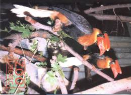 Zoo Liberec - Oiseaux