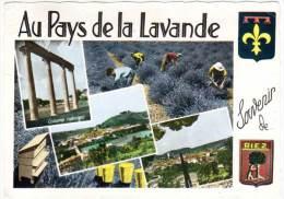 Souvenir De Riez, Au Pays De La Lavande (multivues) - France
